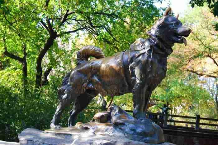 La Statua di Balto a Central Park