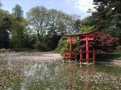 Visitare il giardino botanico di Brooklyn