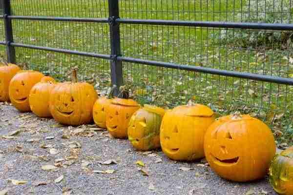 Halloween a Central Park