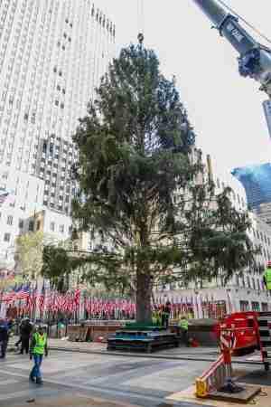 L'albero di Natale del 2019
